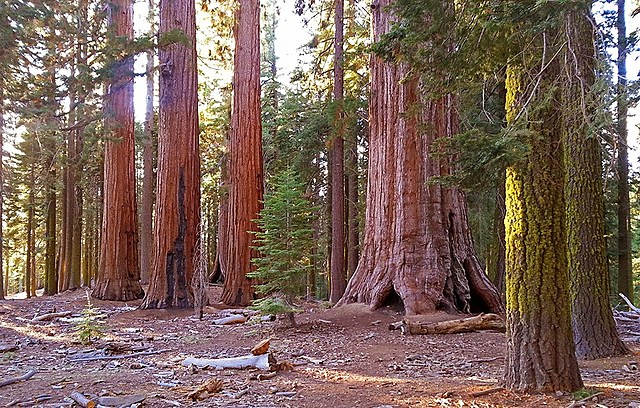 Yosemite plus Sequoia National Park founded