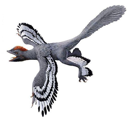 Esimesed linnud