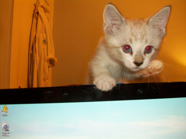 I got my cat, Simon. He was 7 weeks old to the day.