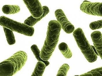 Tuberculosis difteria