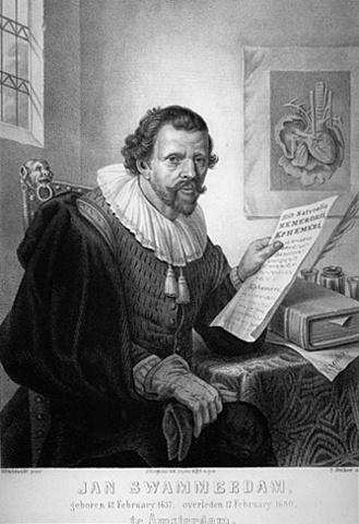 """John Swammerdam """"Desaprueba los espíritus animales de Descartes"""""""