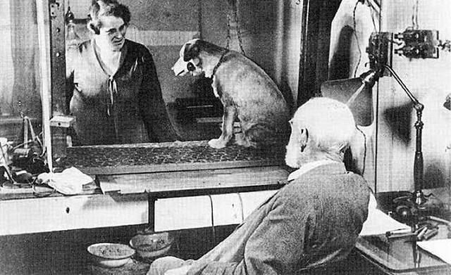 """Pavlov realiza el experimento conocido como """"Experimento de los perros de Pavlov""""."""
