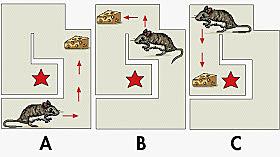 Skinner Respuesta Emocional Condicionada con ratas