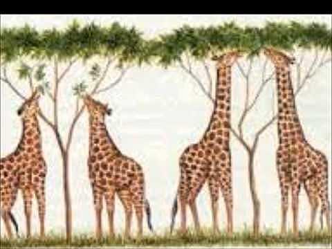 Teoría de evolución por selección natural,