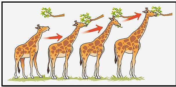 Teoría de la evolución biológica