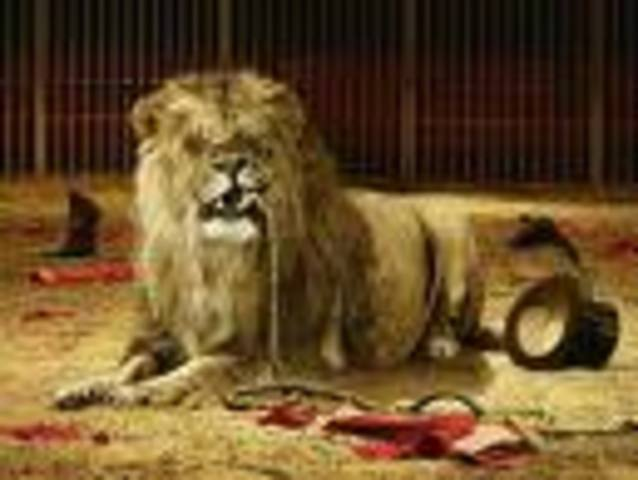 Lion escapes from the circus.