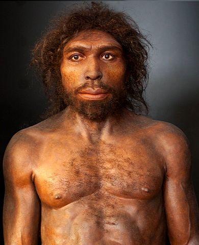 Homo antecesor (encontrado en la gran Dolina de Atapuerca)