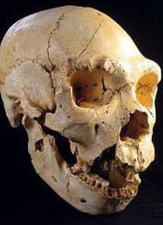 Homo heidelbergensis (encontrado en la Sima de los Huesos de Atapuerca)