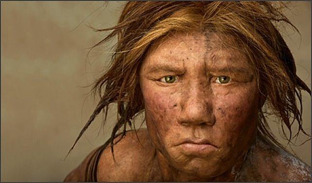Homo neanderthalis