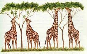 La Teoría Evolutiva de Lamarck