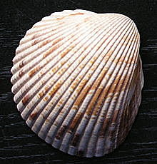 Aparición de la cerámica cardial