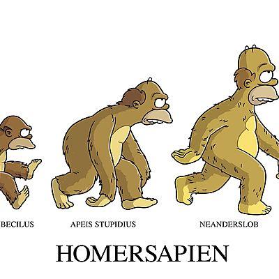 La Evolución Humana  timeline