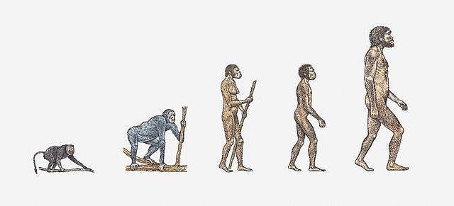 La Teoría Sintética de la Evolución - Neodarwinismo