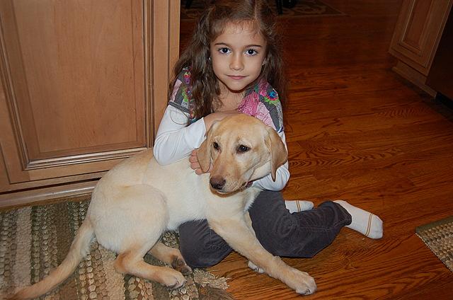 Mi familia obtuvió un perro, Izzy.