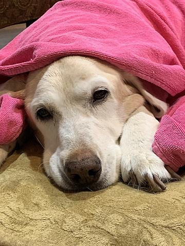 Izzy murió de cáncer cuando solo tuvió nueve años.