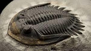 El Trilobites