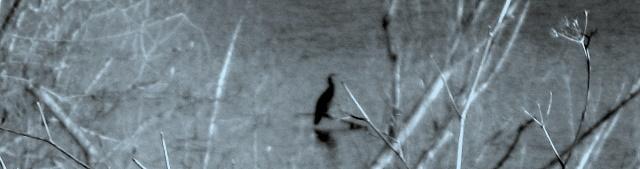 Así como las aves que habitan en nuestra zona