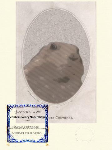 Cynomys Chipmunki