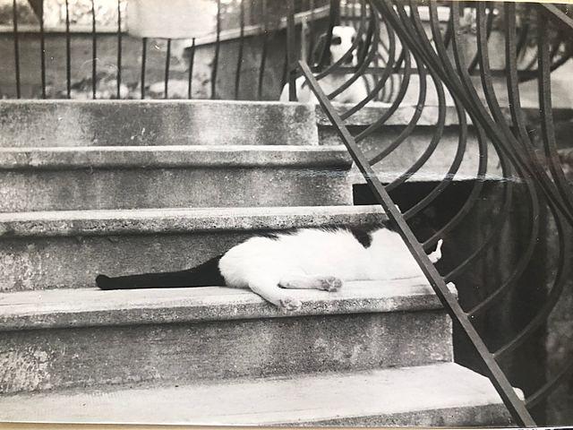 Yves et les chats (2)