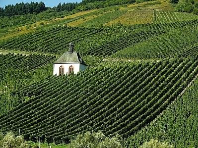 Santiago Rothschild compra el viñedo de burdeos
