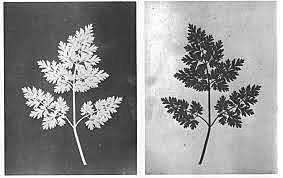William Henry Fox Talbot, invenció del Calotip