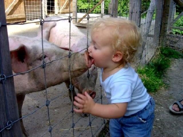 La Organización Mundial de la Salud (OMS) clasificó el brote de gripe porcina como de nivel de alerta cinco, es decir, pandemia inminente