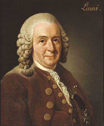 Karl von Linneo