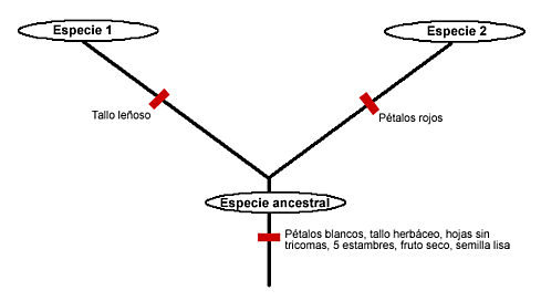 Se produjo la clasificación filogenética de manera formal en México