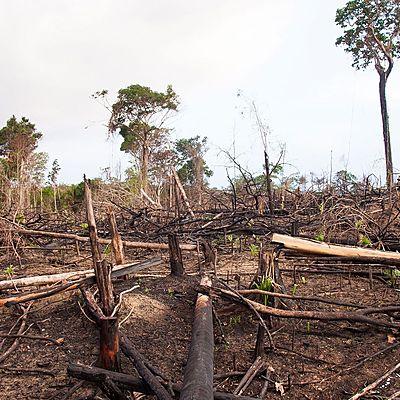 El impacto ambiental en el mundo de las poblaciones humanas timeline