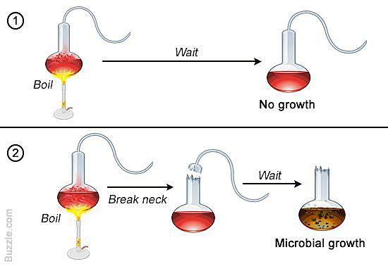 Pasteur's swan neck flask experiment