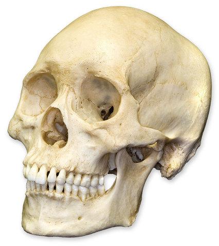 Bones of 15 men are found