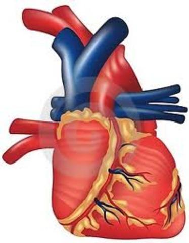 Andamio para reparación del corazón