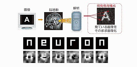 Scientists extract images directly from the brain