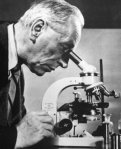 Frits Zernike's phase-contrast microscope