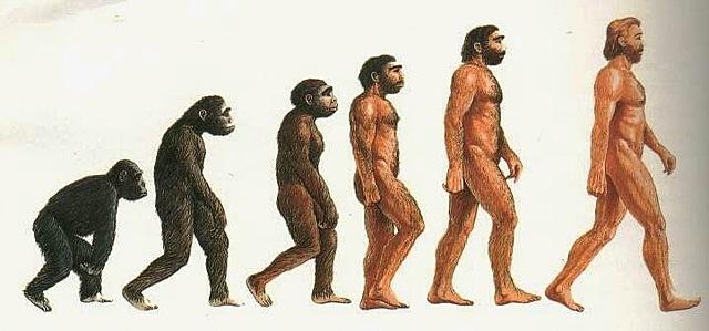 processo di ominazione(60 milioni di anni fa)