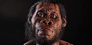 Homo Habilis Homo Naledi