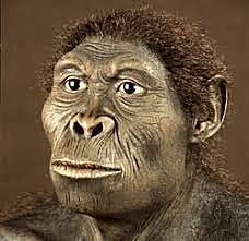 Homo Habilis (2,5 milioni di anni fa)