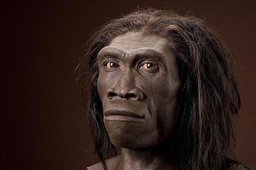 Homo Erectus (1,5milioni di anni fa)