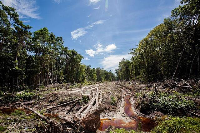 Incendios de la Amazonia