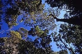 El Plan Nacional de Desarrollo Forestal (PNDF)