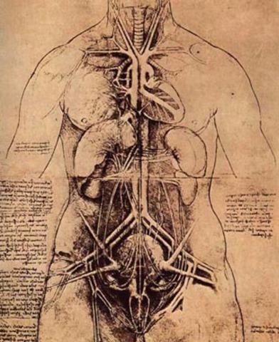 Begining of his anatomic studies