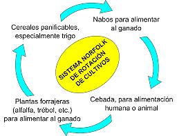 Rotación cuatrienal de cultivos