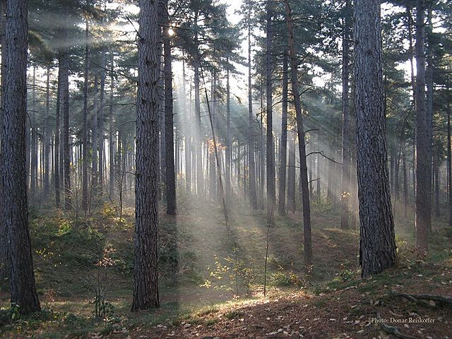 Timber Protection Act