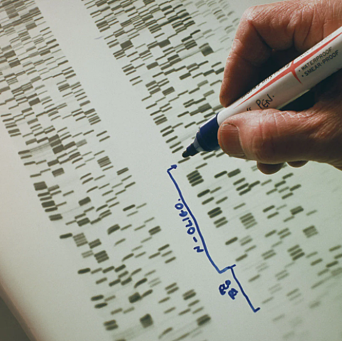 First cancer predisposition gene, BRCA1, is sequenced