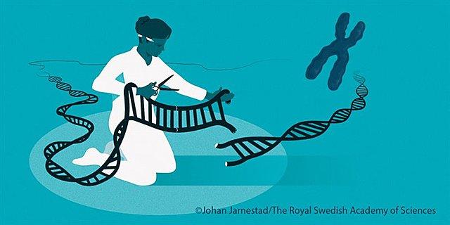 Nobel Saria: Artazi genetikoak