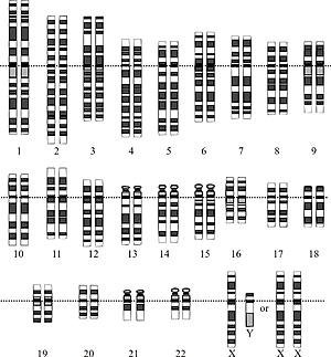 Gizaki genomaren gen sekuentzia osoa