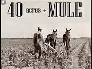 40 Acres and a Mule