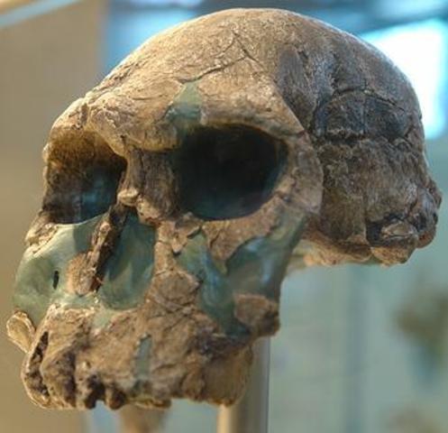 Homo Habilis, 2.5 million to 1.5 million B.C.