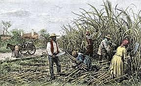 Los africanos son esclavizados y llevados a las Américas a trabajar