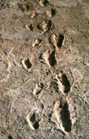 Footprints found, 1978